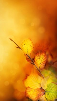 beautiful color of autumn