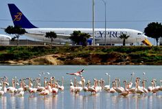 Salt Lake near Larnaca Airport - Cyprus