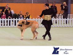 LA MEJOR CLÍNICA VETERINARIA DE MÉXICO. ¿Qué es el Freestyle canino?  El Freestyle canino, es un deporte maravilloso para llevar al extremo tus habilidades como entrenador, al mismo tiempo que tu perro y tú se divierten. Formalmente, el Freestyle es una coreografía musical representada por los perros y sus dueños o entrenadores. En Clínica Veterinaria del Bosque te invitamos a realizar diferentes actividades con tu mascota. #veterinariadelbosque