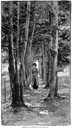 Avenue of Hemlocks and Spruces by Alfred Parsons ~ Free Vintage Clip Art