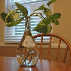Indoor plants, home plants, water plants