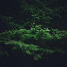 #luna llena entre #árboles @maria_rocio88 #naturaleza noches de verano