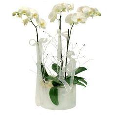 nişan-çiçeği-orkide