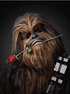 Who needs Wookiee for Valentines Day?