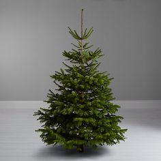 Buy John Lewis Nordmann Fir Real Christmas Tree, 6-7ft Online at johnlewis.com