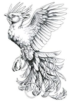 my mom wants a phoenix but shes very picky so ive been on the look out. Phoenix Tattoo flash by *harpyja Star Tattoos, Black Tattoos, New Tattoos, Wing Tattoos, Celtic Tattoos, Sleeve Tattoos, Belly Tattoos, Phoenix Bird Tattoos, Phoenix Tattoo Design