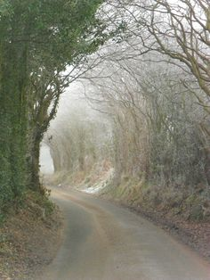 Frosty archway of trees at Hobs Hole Lane, Aldridge, England   byhttp://vwcampervan-aldridge.tumblr.com