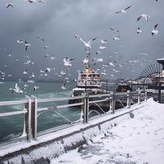 Last winter in Istanbul.   Photo by @leventert. #Turkey #Istanbul #Winter #Travel #Snow #Seagull #Sea #Ship #Instatravel