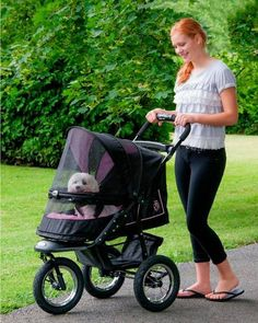 A pet stroller with large tires makes it easy to go for a run or hike with your elderly pet. A protective screen keeps insects and dirt out and your pet safely inside.