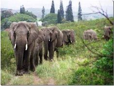 Animals have emotions....they really are amazing!!!  These elephants traveled many miles to hold a vigil because they were grieving for their human best friend who had just passed away.  Unbelievably beautuiful & deeply touches the heart!  <3