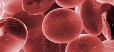 #Descubren el rol clave de una proteína en el proceso de crecimiento celular - Diario Uno: Diario Uno Descubren el rol clave de una…