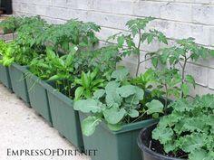 20+ Ideas for your home veggie garden - container veggie gardening