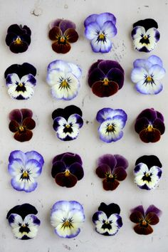 fiestyvxn:   amores perfeitos  Pansies, Violets, Johnny-jump-ups… I love these sweet little flowers. Everyday blossoms, not showy or grand. Cute winks of color among the everything green.