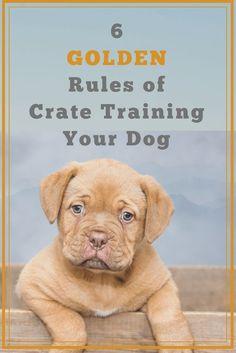 Puppy Potty Training Mistakes… #dogtrainingtips Training Your Puppy, Dog Training Tips, Potty Training, Agility Training, Dog Agility, Leash Training, Training Schedule, Toilet Training, Training Courses