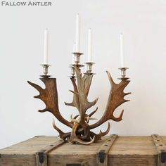 Fight Me Antler Candelabra - The French Bedroom Company