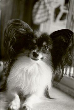 Papillion by iori* | flickr