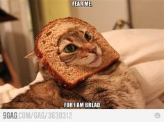 fear me, for i am bread