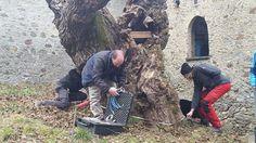 Lezione di arboricoltura sotto il gelso di Ponte in Valtellina