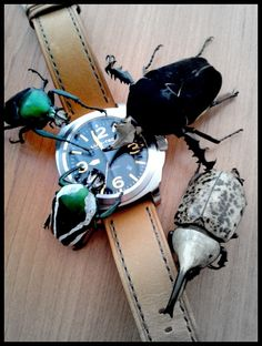 LUM-TEC M56 - Galéria - HODINKOMANIA.SK Wolf Design, Personalized Items, Watches, Wrist Watches, Wristwatches, Tag Watches, Watch