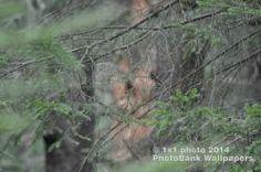 Fotografia: 166• Livre foto • Floresta • Natureza