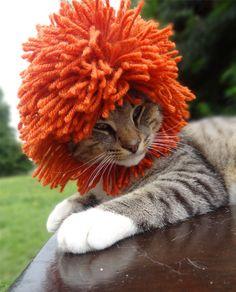 Esse Leão é gato... Parece que é da ilha do retiro! Kkkkk