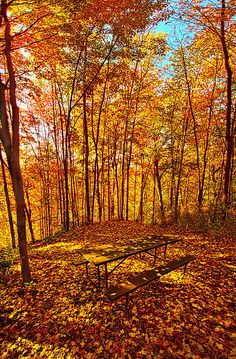 Autumn Lights, Autumn Scenes, Autumn Aesthetic, Autumn Photography, Fall Pictures, Autumn Leaves, Beautiful Places, Scenery, Milwaukee Wisconsin