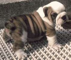 So cute...  The little guy even has fat rolls just like me!