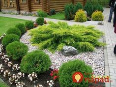 Ideas For House Front Landscaping Small Garden Planning, Front Yard Landscaping Design, Outdoor Gardens, Garden Landscape Design, Beautiful Gardens, Conifers Garden, Patio Garden, Backyard Landscaping Designs, Rock Garden Landscaping