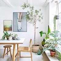 よりナチュラルなインテリアに。グリーン・観葉植物の飾り方見本帖。