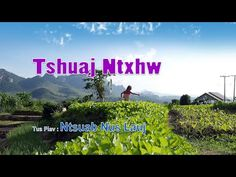 Tshuaj Ntxhw. 1/21/2016