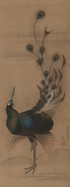 Peacock. Colour and ink on silk. Late 18th century. Mori Sosen (1747-1821). The broken feather detail is brilliant because it sort of reveals that perhaps this fellow was preening for a peafowl's attention and may have been rebuked by another peacock. It's just delightful. #JapaneseArt