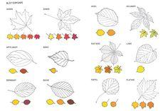 Blätterkunde mit den 24 bekanntesten Bäumen, hilft beim Suchen und Bestimmen der Blattarten.