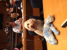 Mr. Mogie is a Very Important Puppy at a leadership session at the Ronald McDonald House Charities (RMHC) 2012 Conference.   August 2012