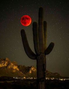 Saguaro and blood moon 2015 Foto Nature, Desert Dream, Desert Sunset, Shoot The Moon, Moon Pictures, Red Moon, Beautiful Moon, Blood Moon, Super Moon