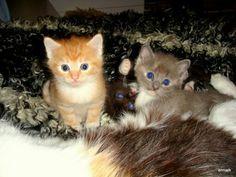 Trzy kotki.