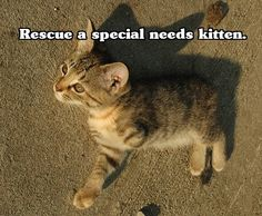 Special needs kitten or cat. I have a soft spot for the special needs and senior cats and dogs.