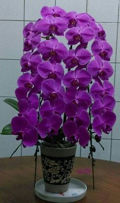 (notitle) - Wonderful world - Orchid Planters, Orchid Flower Arrangements, Orchids Garden, Rare Flowers, Most Beautiful Flowers, Exotic Flowers, Pretty Flowers, Purple Flowers Wallpaper, Red Orchids
