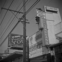 Palms, Los Angeles