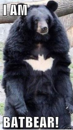 I Am Bat-Bear - Funny Animals with Captions LOL
