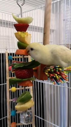 Stainless Steel Skewer with Acrylic Ball to hang your bird's favorite treats and toy parts. Can be refilled easily by unscrewed the acrylic ball. Cockatoo Toys, Parakeet Toys, Parakeet Cage, Diy Parrot Toys, Diy Bird Toys, Cockatiel Care, Diy Cockatiel Toys, Conure Cage, Conure Bird