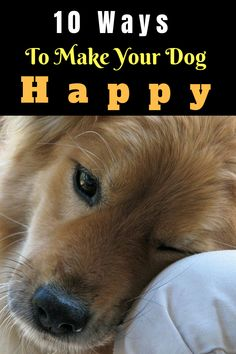 we have put together some great ideas for making your dog happy. 10 Ways To Make Your Dog Happy happy dog training. happy dog tips Dog Stairs, Popular Dog Breeds, Can Dogs Eat, Smiling Dogs, Baby Dogs, Doggies, Training Your Dog, Training Tips, Training Classes