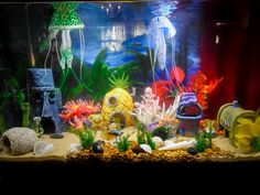 Cute idea for a Bikini Bottom / Spongebob themed aquarium. I love it! It's so fun, bright, and colorful. The fish seem happy and to like it too, which is the most important part.