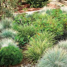 Ornamental Grasses and Shrubs