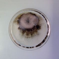 magical contamination: mould as art by antoine bridier-nahmias - designboom | architecture & design magazine