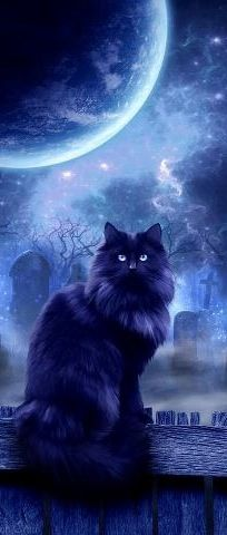 The Witches Familiar by Kerri Ann Crau Hoping all my Black Cat Board pinners are enjoying the art today. I Love Cats, Crazy Cats, Cute Cats, Chat Halloween, Halloween Night, Halloween Magic, Halloween Scene, Cats And Kittens, Cat Lovers