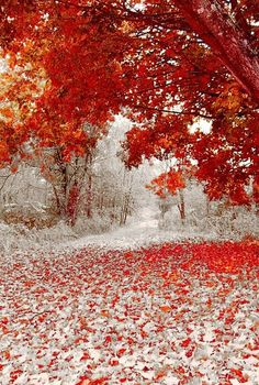 First snow fall in Autumn