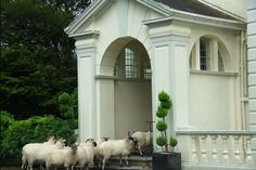 Follow the leader 🐑 Follow The Leader, Contemporary, Modern, Countryside, House, Trendy Tree, Home, Homes, Houses