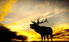A red deer stag is silhouetted against the early morning sunlight at Burley Manor in the New Forest, Hampshire  dir 3w