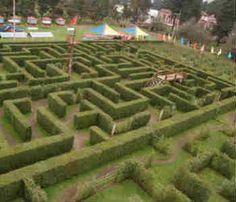 El enigmático laberinto inglés de Edomex, ex Hacienda de Panoaya