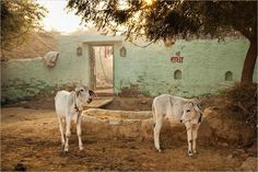 Fotogalerie - Momentaufnahme Indien - Reise-Fotogalerien- GEO.de